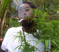File photo: Man smoking next to marijuana plant