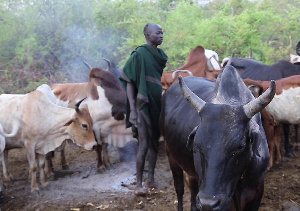 Among the Suri/Surma, men take blood from a living cow and drink