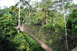 The Kakum National Park has lost in excess of GH