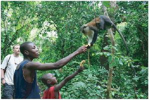 Tourism Monkey Sanctuary