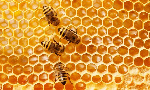 Beekeeping is a game-changer for the youth - Samuel Meh