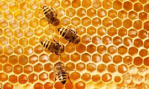 Honey business is very big in the Adaklu District