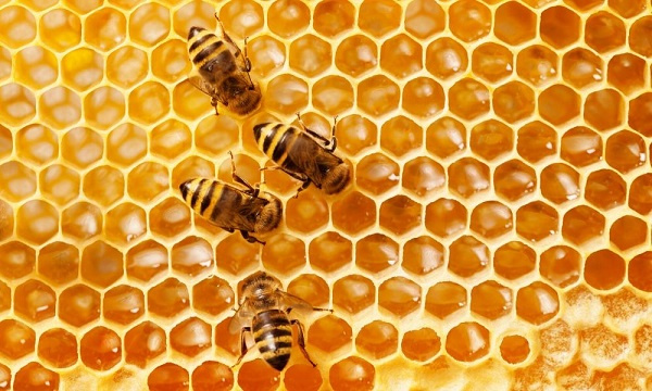 500 out-growers benefit from fertiliser and bee-hive production