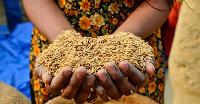 COVID-19, Desert Locust are factors exacerbating acute food insecurity