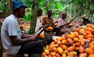 Cocoa is a major contributor to Ghana's economy, hence the need to pay particular attention