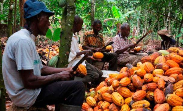 COCOBOD signs $1.3bn loan to purchase cocoa beans next season
