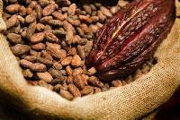 File photo - Cocoa beans