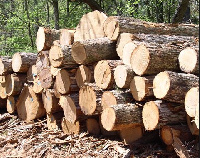Some Rosewood gathered (File photo)