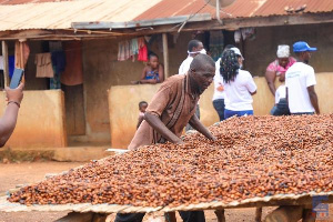 Ghana and Ivory Coast produce 60% of the world's cocoa beans