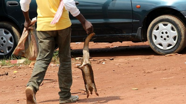 About 65 to 75 per cent 'bush meat' have been poisoned – Veterinary Council