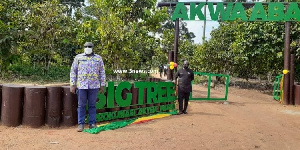 The Big Tree tourism site at Asene Manso Akroso