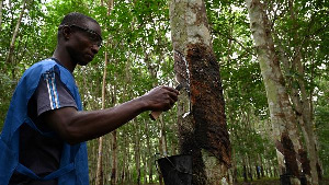 Ivory Coast rubber production has continued to rise since 2005