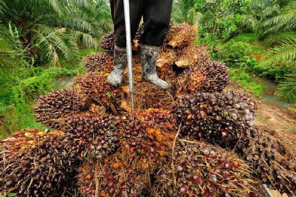 FDA trains Environmental Health Officers in oil palm value chain