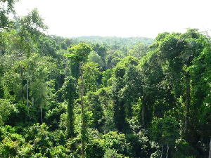 The Achimota Forest Reserve is located in the heart of the Greater Accra region