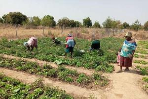 Some women farming