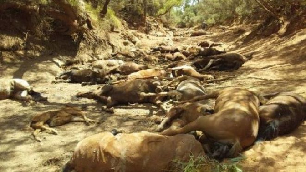 Rangers found the horses in a dried-up waterhole in the Northern Territory
