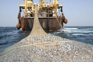 Saiko is a severely destructive form of illegal fishing