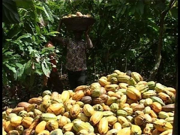 Ghana to establish cocoa production plant in Rwanda