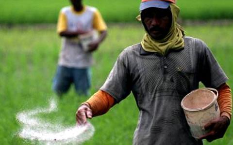 Private firm, UG scientists develop new organic fertiliser