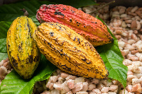 COCOBOD has fixed the price for  64 kilo-grammes of cocoa at GH¢660.00