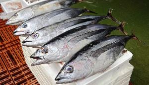 File photo of Tuna fish