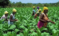 Innovative business models can help rural-based farmers