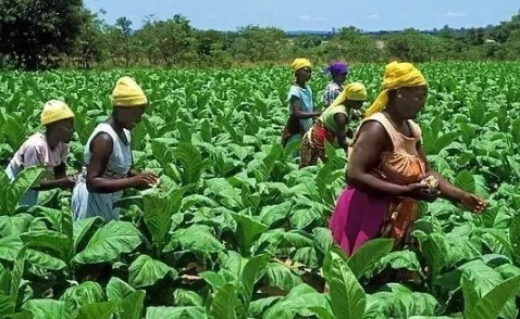 Govt urged to create market access fund for smallholder farmers