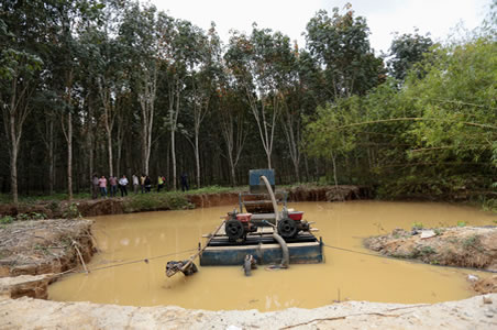 GREL to lose €550,000 investment as illegal miners encroach on rubber plantation