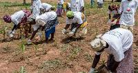 Some farmers applying fertilizer to their crops