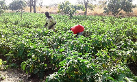 Banks reportedly still see the agric sector in an unfavourable light