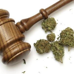 Pdt Marijuana