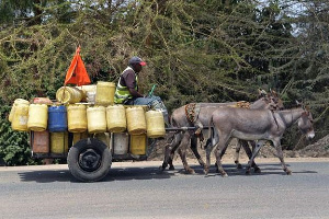 Donkeys are used for transport and agriculture