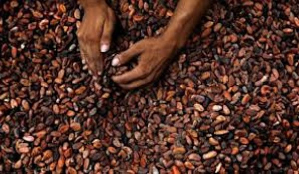 Cargill invests over $113m in Ivory Coast, Ghana cocoa sector