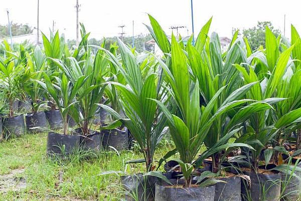 Upper East Region records high yields in major crops