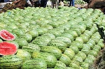 Poor road network affecting watermelon farmers