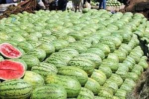 Watermelon 4543e