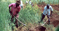 Peasant Farmers say the delay in importing seeds for the progamme will affect planting season