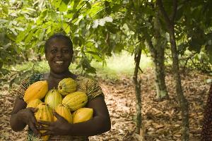 File Phote [A cocoa farmer]