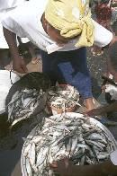 Trader at the wholesale fish market Elmina, Vince Harris