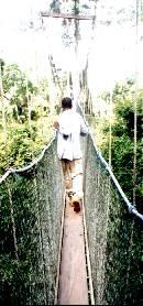 Canopy walk in Kakum, Ragna Meul