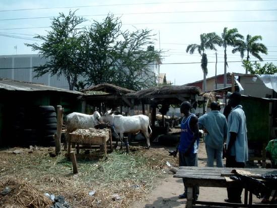Cows @ Kaneshi market (Accra)