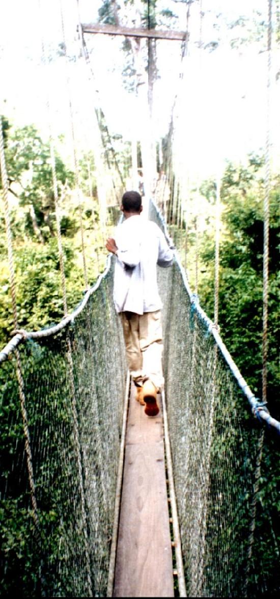 Canopy walk in Kakum