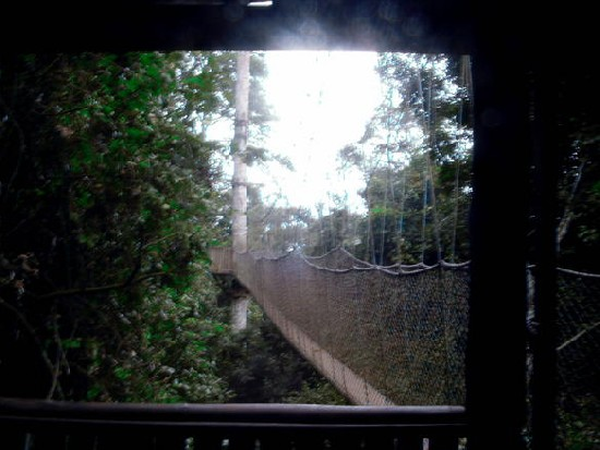 Canopy Walkway @ Kakum National Park