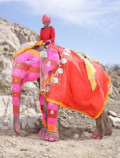 Photos: The extraordinary painted elephants of India