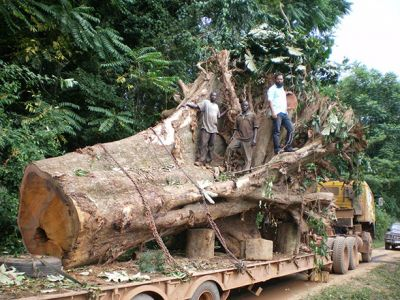 Ghana's Forests are Disappearing at an Alarming Rate