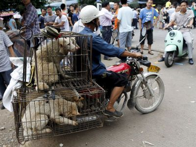 Pictures: China's annual dog meat festival