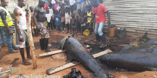 PHOTOS: Smoked dolphins seized as MCE swoops on Axim fishmongers. 13