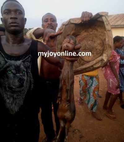 Chiefs and people of Asuodei panic over lamb born with human-like face